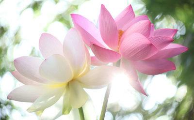 online spiritual resources